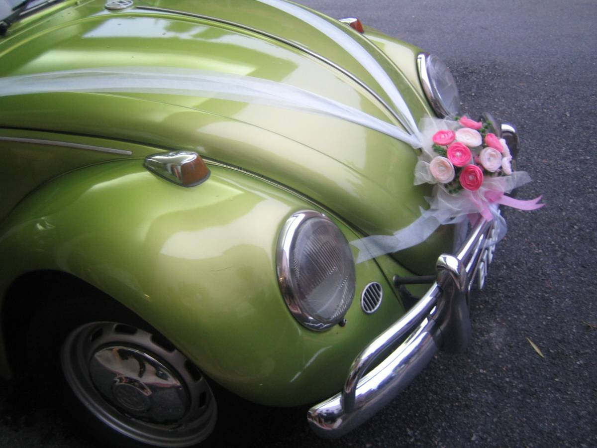 wedding-beetle-1443853-2cvlg-hsabz6